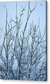 Stark Beauty - Snow On Branches Acrylic Print by Denise Beverly