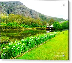 Stark Conde Wine Estate Stellenbosch South Africa 3 Acrylic Print by Charl Bruwer