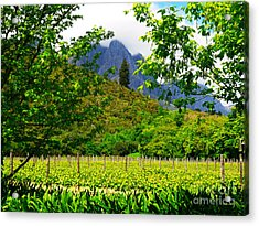 Stark Conde Wine Estate Stellenbosch South Africa 4 Acrylic Print by Charl Bruwer