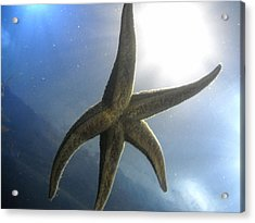 Acrylic Print featuring the photograph Starlight by Kristen R Kennedy