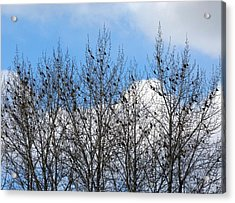 Starlings In The Cottonwoods Acrylic Print by Will Borden