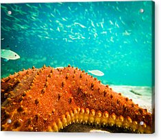 Stars And Fish And Starfish Acrylic Print