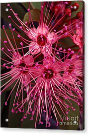 Acrylic Print featuring the photograph Stars by Michelle Meenawong