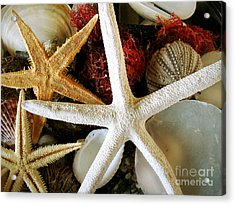 Stars Of The Sea Acrylic Print by Colleen Kammerer