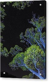 Stars Out Tonight Acrylic Print