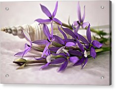 Starshine Laurentia Flowers And White Shell Acrylic Print