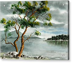Stately Arbutus Acrylic Print by Frank Townsley
