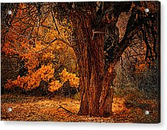 Acrylic Print featuring the photograph Stately Oak by Priscilla Burgers