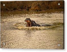 Stay Away From My Waters Hippo Acrylic Print by Eti Reid