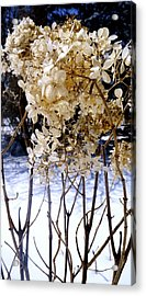 Stay Close Stay Warm Acrylic Print by Danielle  Broussard