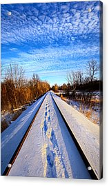 Staying Within The Lines Acrylic Print by Phil Koch