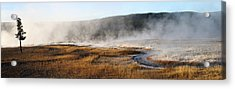 Steam Creek Acrylic Print by David Andersen