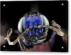 Steel Blue Cricket Hunter Acrylic Print by Us Geological Survey