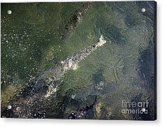 Steelhead Abstract 2 Acrylic Print