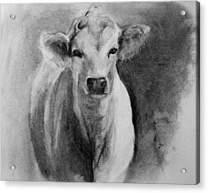 Steer- Drawing From Life Acrylic Print by Michele Carter