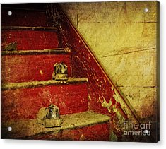 Acrylic Print featuring the photograph Step Back In Time by Debra Fedchin