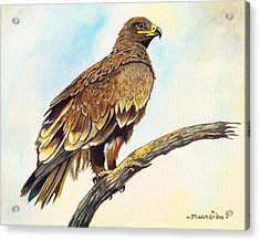 Steppe Eagle Acrylic Print by Anthony Mwangi