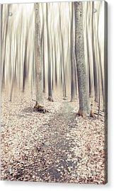 Steppin' Through The Last Days Of Autumn Acrylic Print by Hannes Cmarits