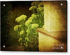 Steps Acrylic Print by Rosemary Aubut