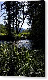 Sterline Blue  Acrylic Print by Tim Rice