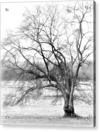 Sterling Fog Acrylic Print by Cris Hayes