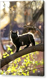 Acrylic Print featuring the photograph Sterling by Jane Melgaard