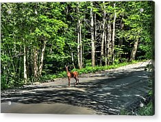 Sterling Valley Doe Acrylic Print