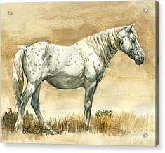 Sterling Wild Stallion Of Sand Wash Basin Acrylic Print