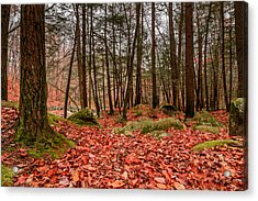Acrylic Print featuring the photograph Stickney Brook Leaves by Jeremy Farnsworth