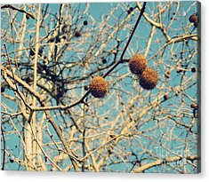 Sticks And Pods Acrylic Print
