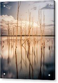 Sticks Acrylic Print by Steve Stanger