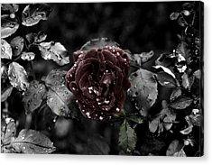 ...still A Rose Acrylic Print