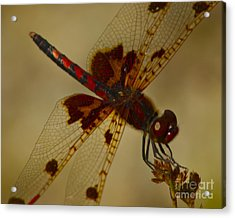 Acrylic Print featuring the photograph Still by Alice Mainville