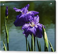 Still Beautiful Acrylic Print
