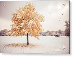 Still Dressed In Fall Acrylic Print