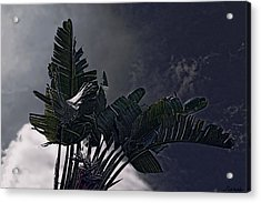 Acrylic Print featuring the photograph Banana Tree -still In A Storm #3  by Renee Anderson
