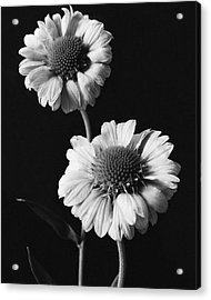 Still Life Of Flowers Acrylic Print