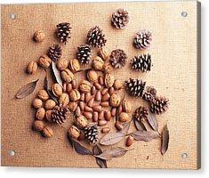 Still Life Of Pine Cones, Walnuts And Acorns Acrylic Print by GYRO PHOTOGRAPHY/amanaimagesRF
