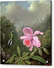 Still Life With An Orchid And A Pair Of Hummingbirds Acrylic Print by Martin Johnson Heade