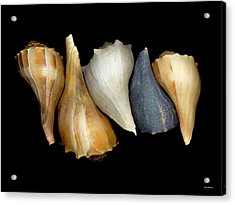 Still Life With Five Whelk Shells Acrylic Print by John Pagliuca