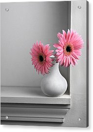 Still Life With Pink Gerberas Acrylic Print by Krasimir Tolev