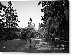 Still Standing In The Winter Sunset Bw Acrylic Print