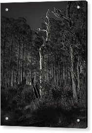 Still Standing Acrylic Print by Mario Celzner