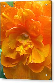 Still The One - Images From The Garden Acrylic Print by Brooks Garten Hauschild