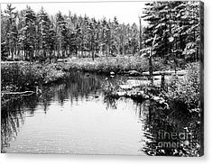 Still Waters Acrylic Print by Sue OConnor