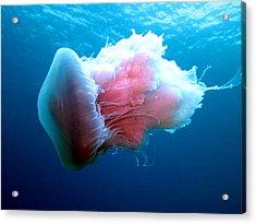 Stinging Beauty Caribbean Sea Acrylic Print by Laura Hiesinger