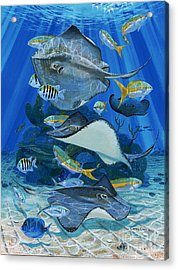 Stingray City Re0011 Acrylic Print by Carey Chen