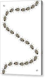 Stink Bugs I Phone Case Acrylic Print