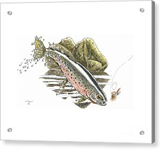 St.joe Cuttroat Acrylic Print