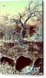 Stone Age Acrylic Print by Mickey Harkins